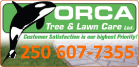 Landscaping – Lawn Maintenance – Tree Pruning – Irrigation